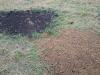 Байбаки закрыли свои норы земляной пробкой © www.zapoved-kursk.ru