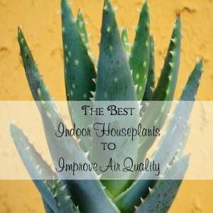The Best Indoor Houseplants to Improve Air Quality