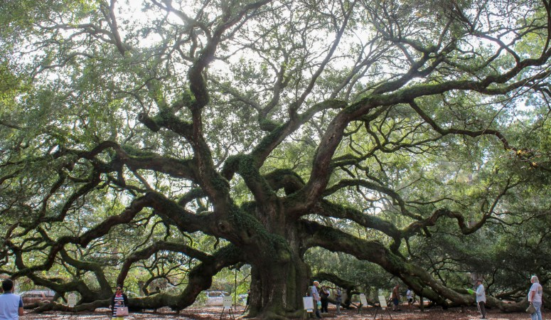 Kiawah Beach // Angel Oak