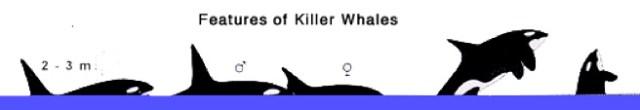 spot-Orca