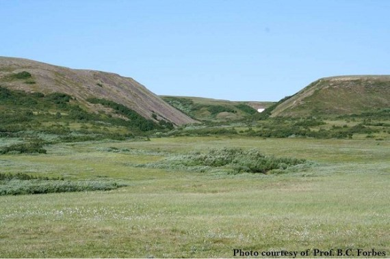 Alder (dark green) and willow (greyish) shrubs grow on the northernmost foothills of the Polar Ural in West Siberia, Russia