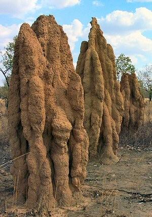 Termite hill mounds Northern Territory Australia