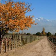 Spielmann-Estates-vinhedo-arnaldo-lorencato