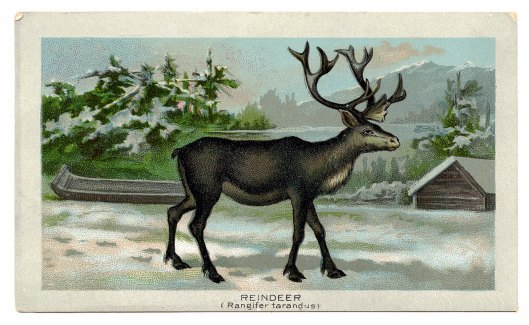 reindeer-graphicsfairy010b