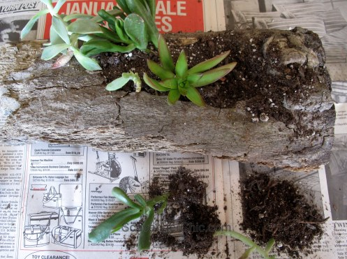 DIY Log Succulent Planter