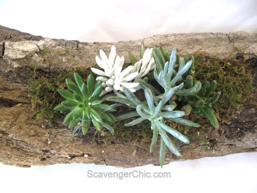 DIY Log Succulent Planter-010