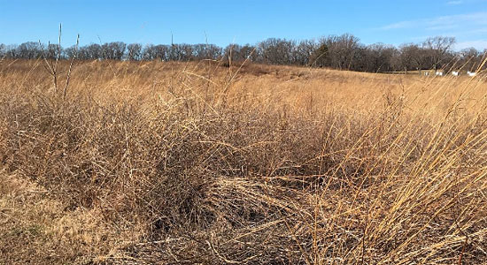 Tallgrass Prairie at Fort Bellefontaine County Park