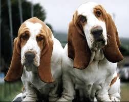 Google - Hound Dogs