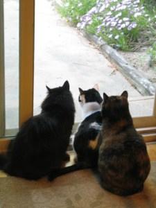 2010 3 Cats in Window