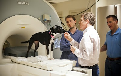 What is your dog thinking? Brain scans unleash canine secrets