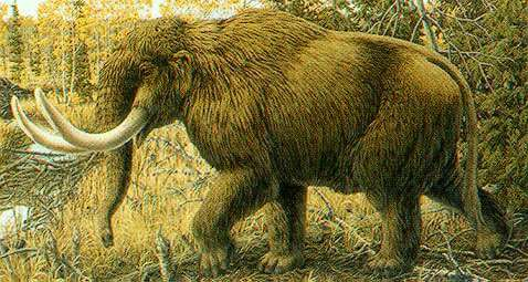 Mastodons, humans lived side-by-side