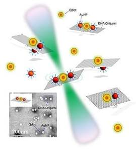 The NIST team explored the behavior of quantum dots and gold nanoparticles placed in different configurations on small rectangular constructs made of self-assembled DNA (see inset for photograph). Laser light (green) allowed the team to explore changes in the fluorescent lifetime of the quantum dots when close to gold particles of different sizes. Credit: NIST