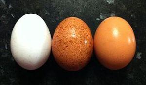 320px-Egg_colours