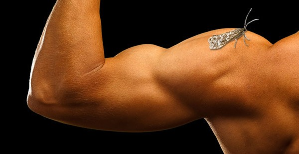 First flexing human muscle grown in lab