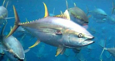 Not so fast – our fishy friends can also feel pain