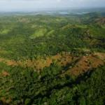 Tropical forests 'fix' themselves