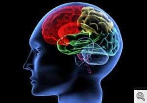 Study Shows Autistic Brains Create More Information at Rest