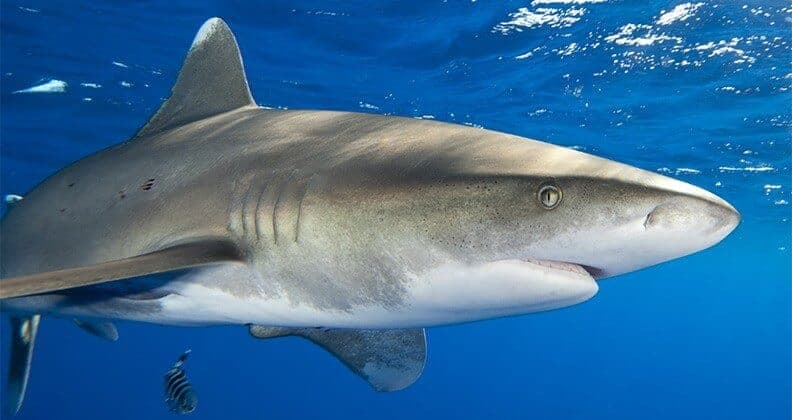 Aussie researchers work to hide our splashes from sharks