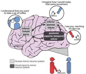 Brain mapping confirms patients with schizophrenia have impaired ability to imitate