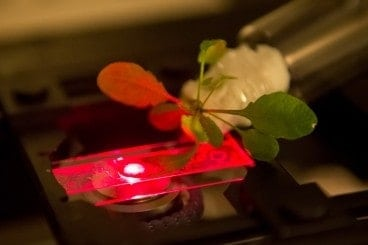 MIT team creates bionic plants