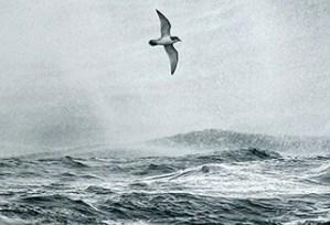 seabird-lg