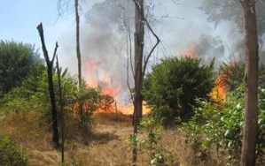 Drought and fire in the Amazon lead to sharp increases in forest tree mortality