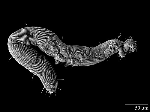 USDA Researchers Go High-Tech to View Tiny Organisms