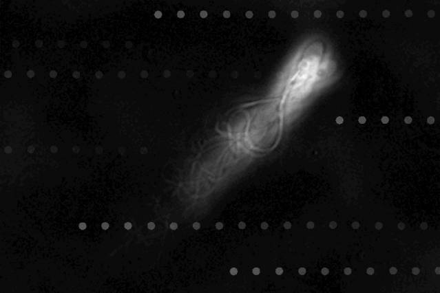 Sperm cells extremely efficient at swimming against a current