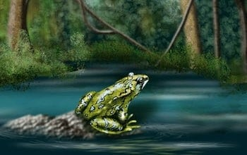 Amphibians can acquire resistance to deadly fungus
