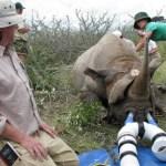 Namibia-rhino-study8-14