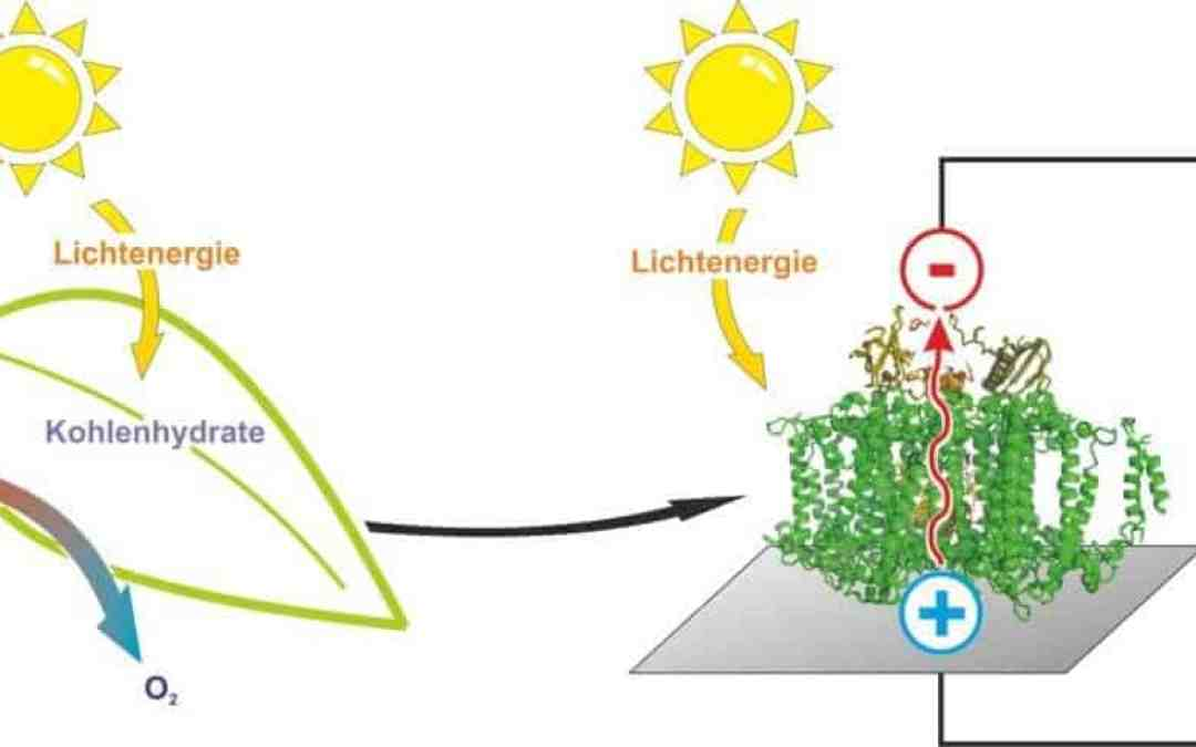 A semi-artificial leaf faster than natural photosynthesis