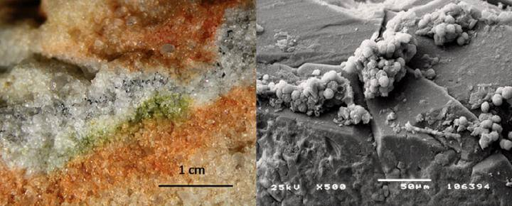 Antarctic fungi survive Martian conditions on the ISS