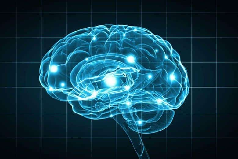 Neural pathway responsible for opioid withdrawal found