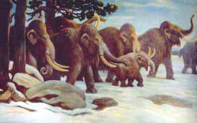 DNA proves mammoths mated beyond species boundaries