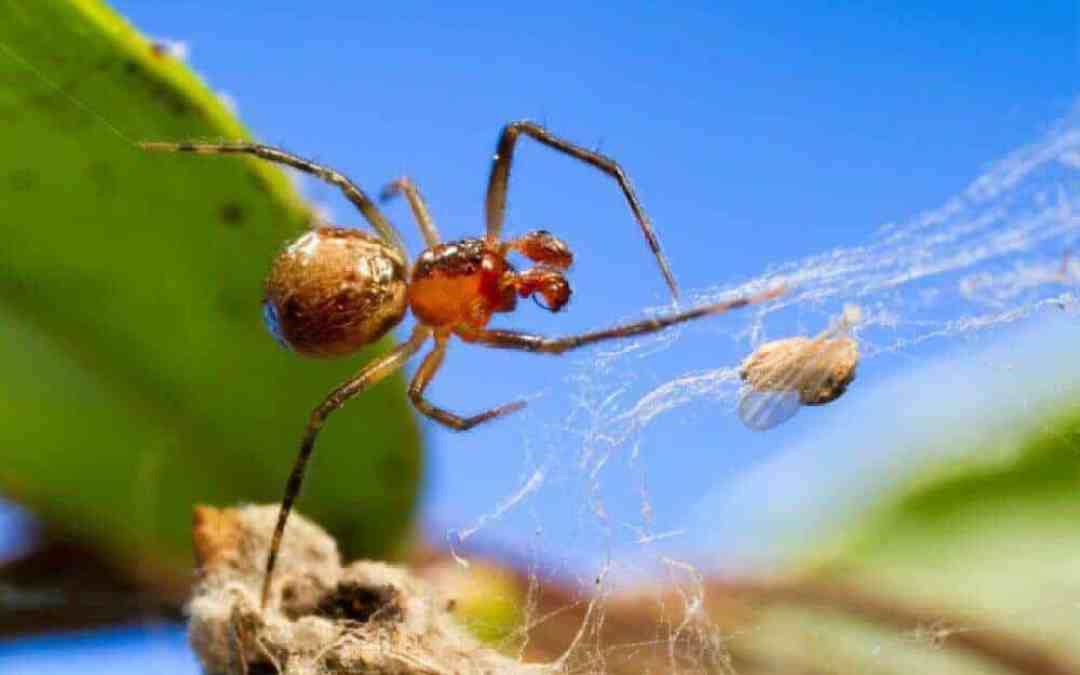 Temperature helps drive the emergence of different personalities in spiders