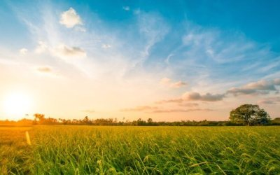 Garden grass could be source of cheap renewable energy