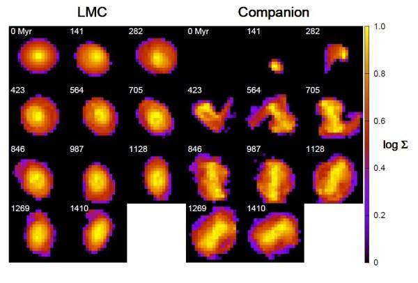 Dichteverteilung der LMC (links) und der verschluckten Begleitgalaxie (rechts) alle 141 Millionen Jahre. Die Dichteskalen sind separat zwischen 0 und 1 (also 0% und 100% der jeweils maximalen Dichte) normiert. Man sieht, wie sich die Begleitgalaxie anfangs auseinanderzieht und dann über die ganze Breite der LMC ausbreitet, sogar darüber hinaus, und sie bildet einen Balken aus. Die LMC wird nur wenig verändert. Bild: [1]