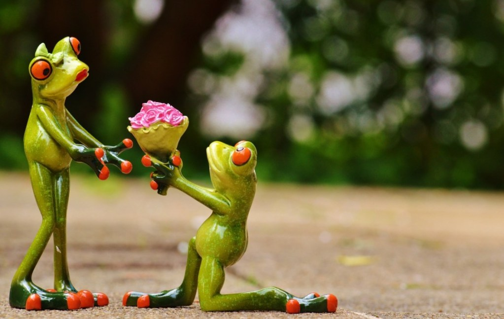 i-beg-your-pardon-marriage-proposal-excuse-me-frog