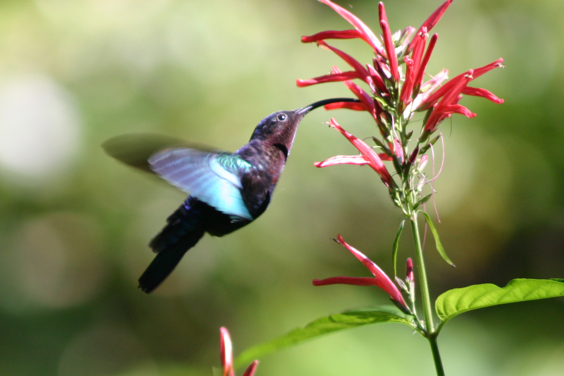 Magnificent Winter Ten Facts About Science Vibe Where Do Hummingbirds Sleep Nest Where Do Hummingbirds Sleep houzz-03 Where Do Hummingbirds Sleep