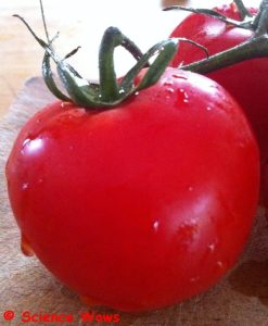 Tomatoes are made up of 94% water