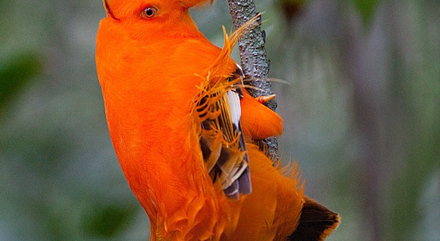 Mystery Creature of the week – an orange extravagance!