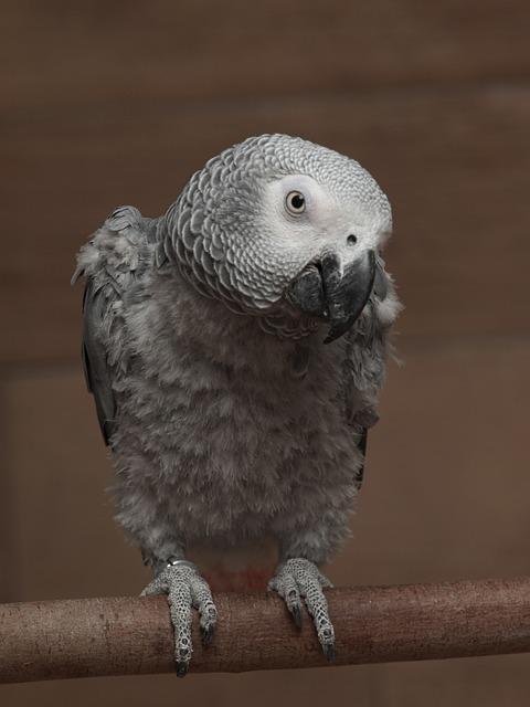 Why do some birds mimic human speech?