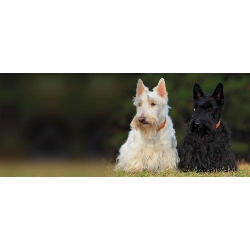 Medium Crop Of All Terrier Rescue