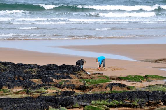 Grannies Heilan Hame Digging
