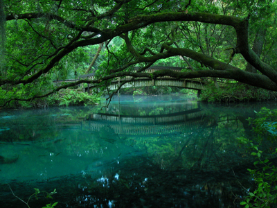 Trail Guide Juniper Springs Florida
