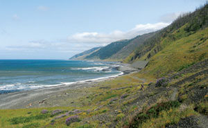 Boy Scout Image -- Lost Coast