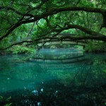 Trail Guide Juniper Springs