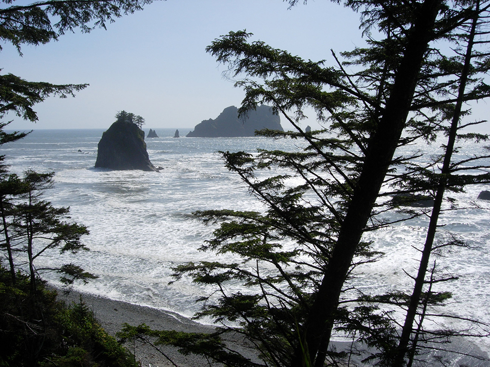 Plan a trip to Washington's Olympic National Park