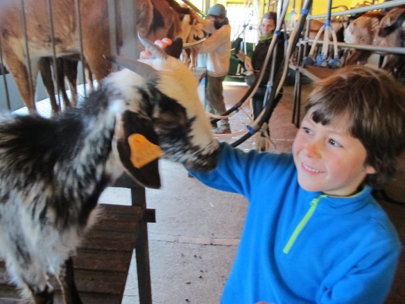Zac greets a goat - they're such friendly creatures.