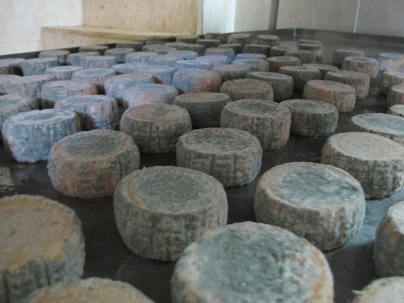 Cheeses maturing nicely. My mouth is watering just looking at this picture.